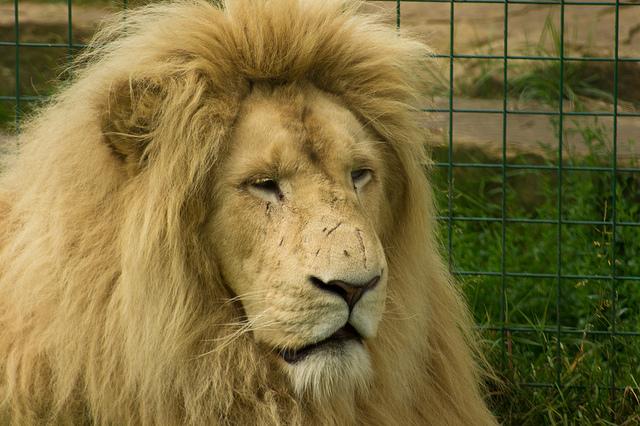 Fenómeno LION LinkedIn